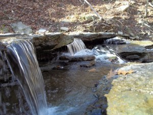 mushrooms can restore clean natural water. Water is a necessity
