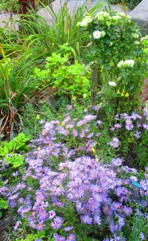 Purple Aster's & Miniature Mint Roses