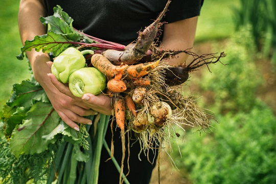 how vegetable gardening saves you money