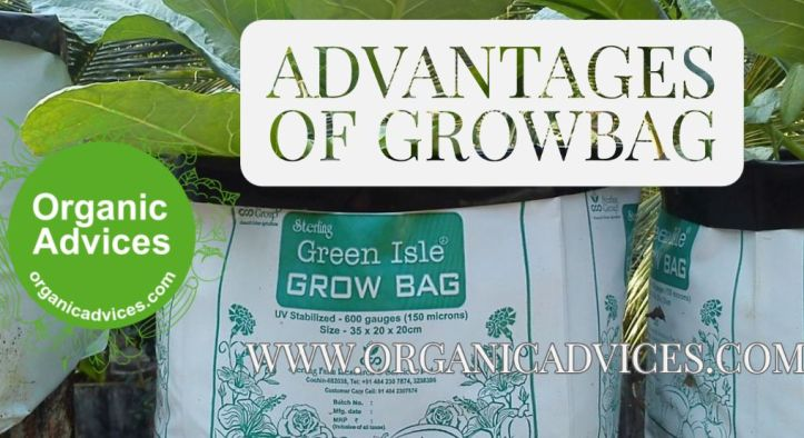 Growbag – What is a Grow Bag and How can we use it in Terrace Farming