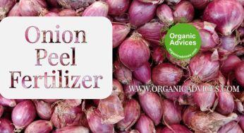 Onion Peel Fertilizer for better output from Home Terrace Vegetable Garden
