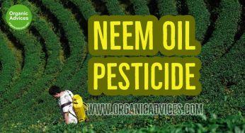 Neem Oil Pesticide – Organic Pesticides Making Methods