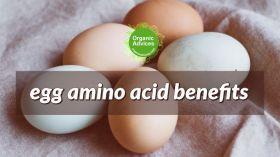 egg amino acid fertilizer benefits