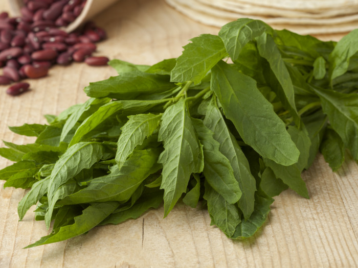 Mint leaves will kill hookworms