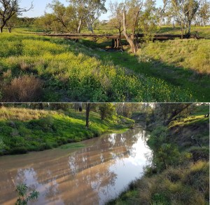 DarlingDowns Farm Opportunity