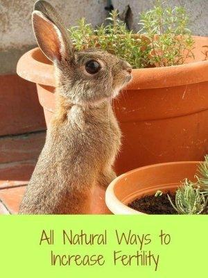 Natural fertility help