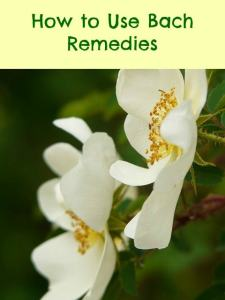 Bach Rock Rose remedy