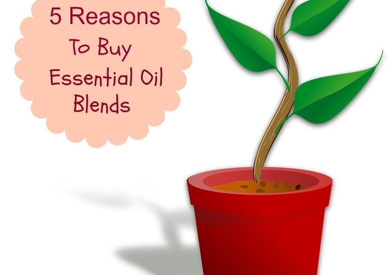 Plant Therapy essential oil blends