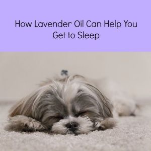 does lavender oil help sleep