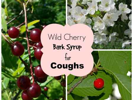 wild cherry bark syrup uses