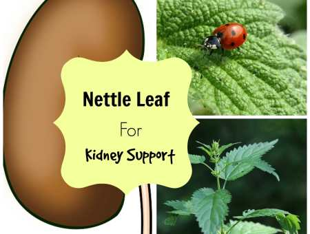nettle leaf for kidneys