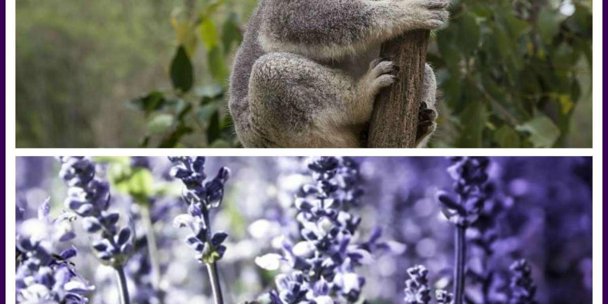 Edens garden essential oils vs doterra archives organic - Are edens garden essential oils ingestible ...