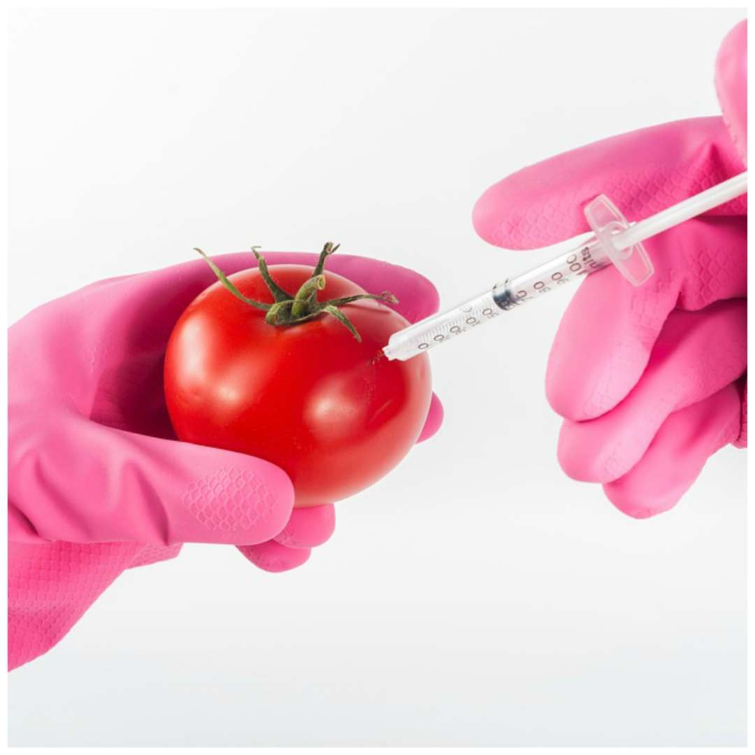 genetically modified food is bad essay Contributed to food security,  and genetically modified foods  concerns about the health dangers of genetically engineered foods,.