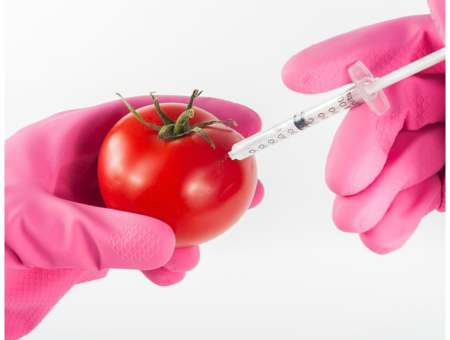 why genetically modified food is bad