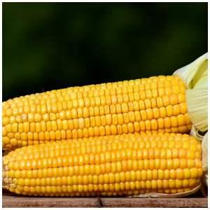 Can you find non GMO corn