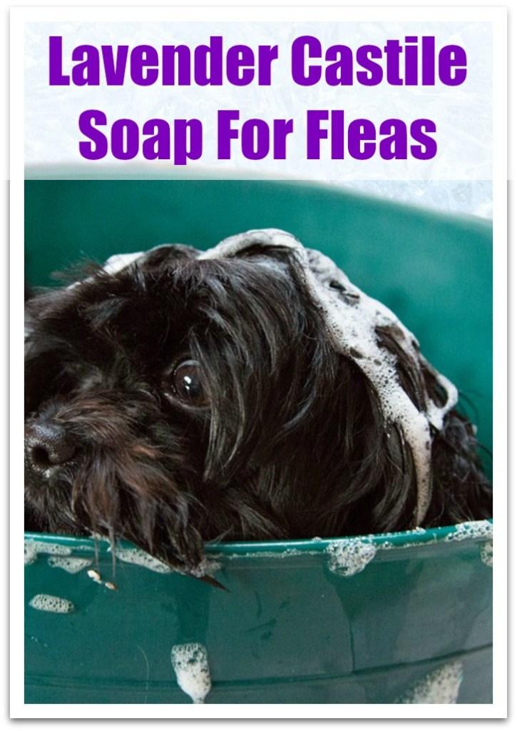 Lavender Castile soap for fleas