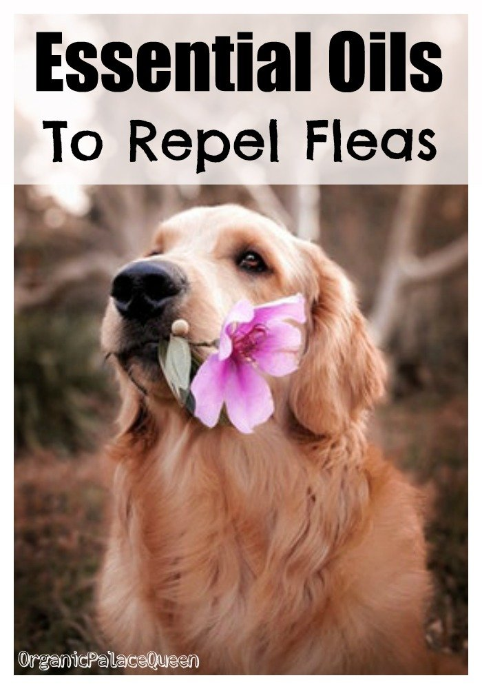 Essential oils that may repel fleas