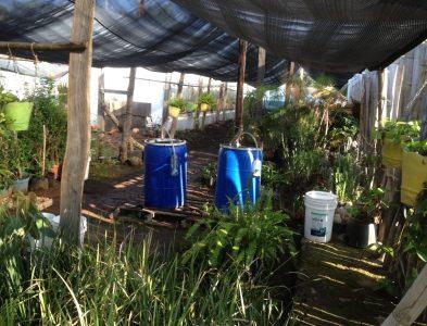 Preparación de nutriente foliar Súper Magro