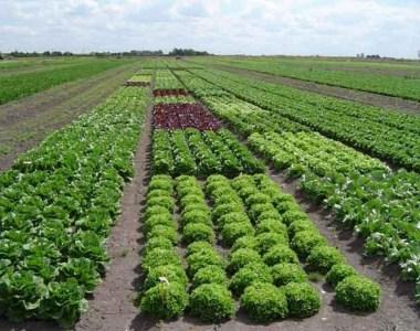 Técnicas de cultivo