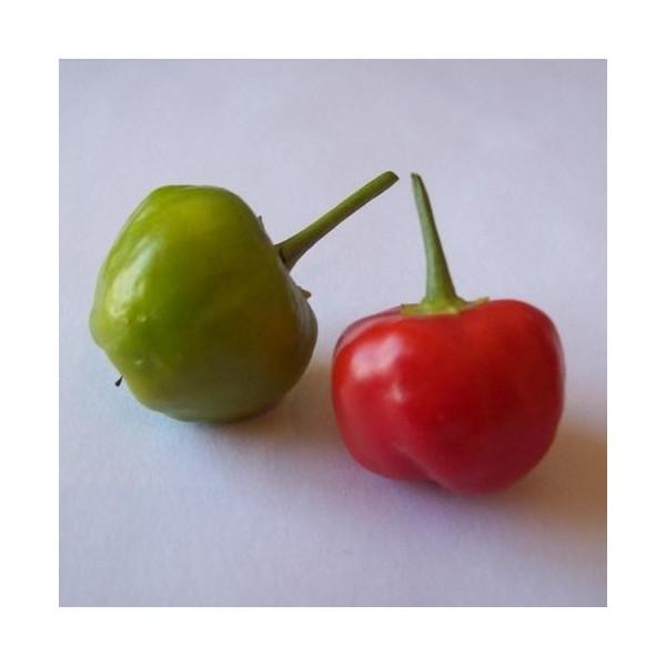 Sweet Bell Pepper Organic Seeds