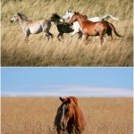 Finding My Stolen Horses In Lesotho Organictales