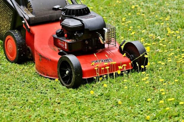 printable chore charts mow lawn