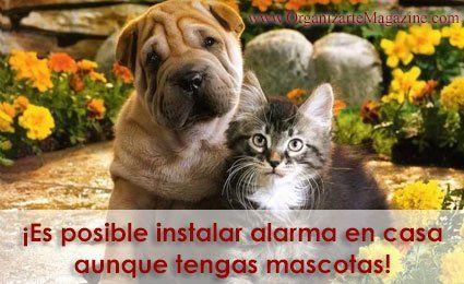 Alarmas en casa con mascotas