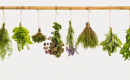 Hierbas y plantas que repelen mosquitos