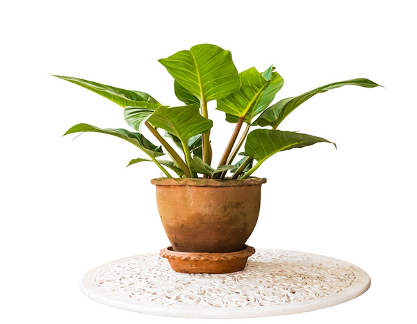 filodentro - plantas para oficina o casa