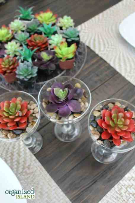 Decorating does not have to be expensive with these dollar store succulents.