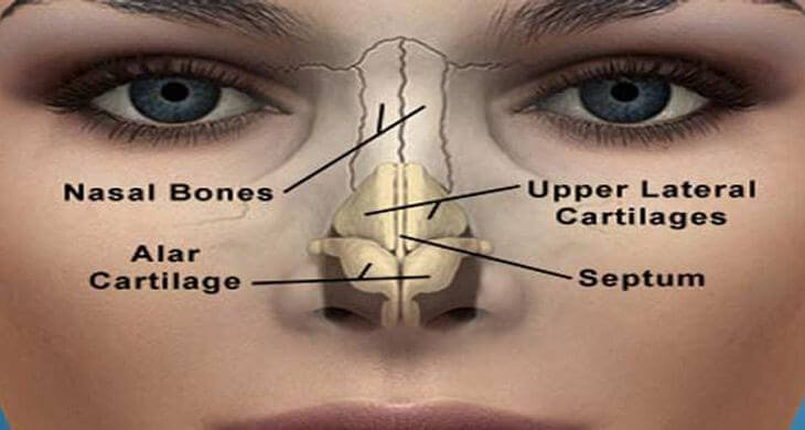 Human Nose Facts, Diseases, Functions And Location