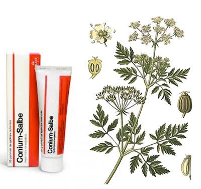 (nutzloses) Hausmittel zum Länger Durchhalten - Gefleckter Schierling / Hemlock (lat. Conium maculatum)