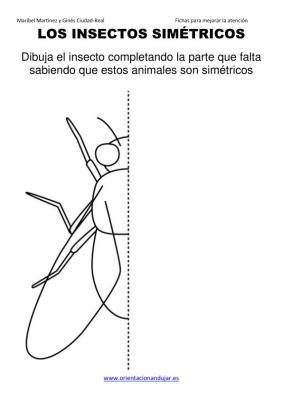 los insectos simetricos trabajamos  lateralidad  izq-dcha ORIENTACION ANDUJAR05 (1)