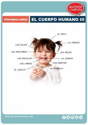lamina para aprende vocabulario el cuerpo humano 3
