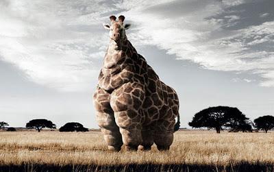 jirafa-obesa