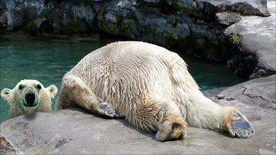 oso-polar-Horsemanning