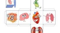 Aprender el cuerpo humano puede resultar complicado y tedioso en los primeros cursos de primaria. Por eso, nosotros queremos a ponérselo un poco más fácil con estos estupendos dados de […]
