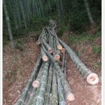 Harvested bamboo poles
