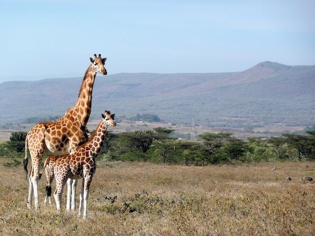 Affordable International Destinations For Indians - kenya