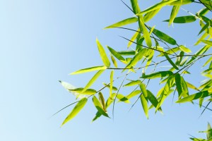 spring into great health with chinese medicine