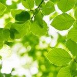 Licence pro Santé sécurité environnement