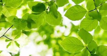 formation en écologie