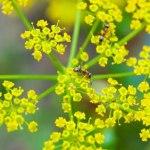Licence pro Biologie appliquée aux écosystèmes exploités