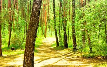 forêt du languedoc-roussillon