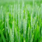 Licence pro Gestion de la Production Agricole respectueuse de l'environnement