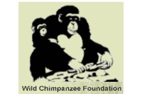 suivi écologique des Chimpanzés Sauvages