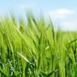 Licence pro Agriculture, durabilité, nouvelles technologies
