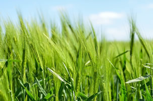 licence pro agriculture durabilté et nouvelles technologies