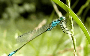 btsa gpn - protection de la nature