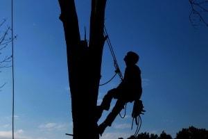 formation taille et élagages des arbres